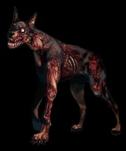 zombie dog resident evil